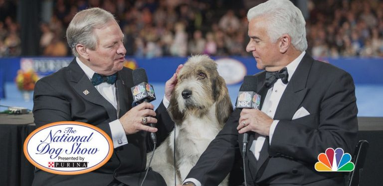 What to Expect at the National Dog Show